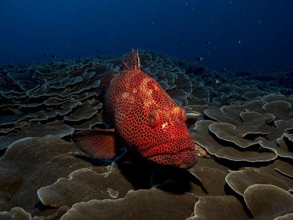 vida en mar caribe-taganga