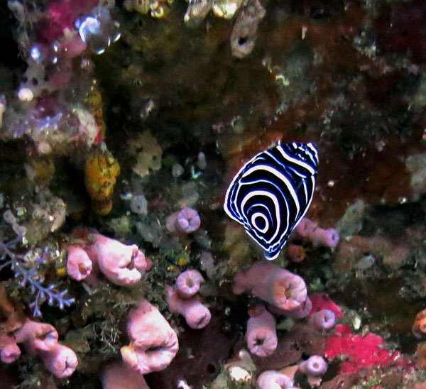 nature inside the sea tayrona park taganga santa marta
