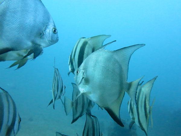 peces en el tayrona