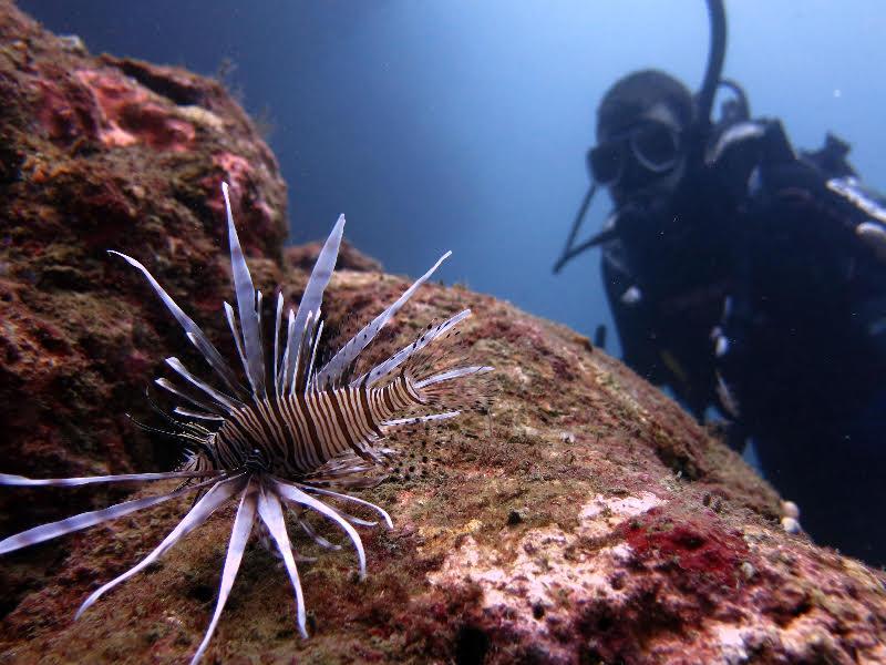 diving in Taganga