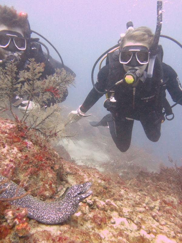 course dive tayrona santa marta