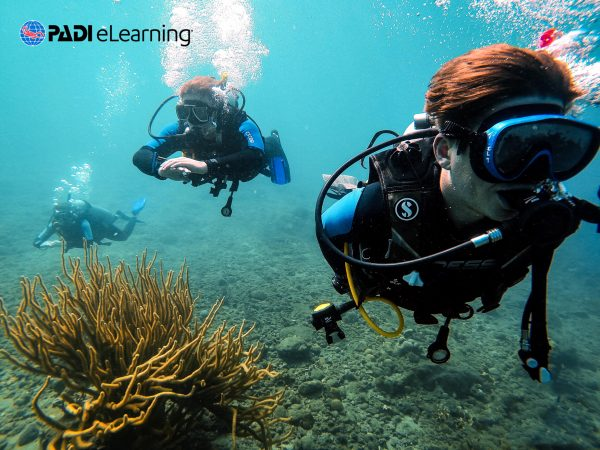 divemaster theory elearning