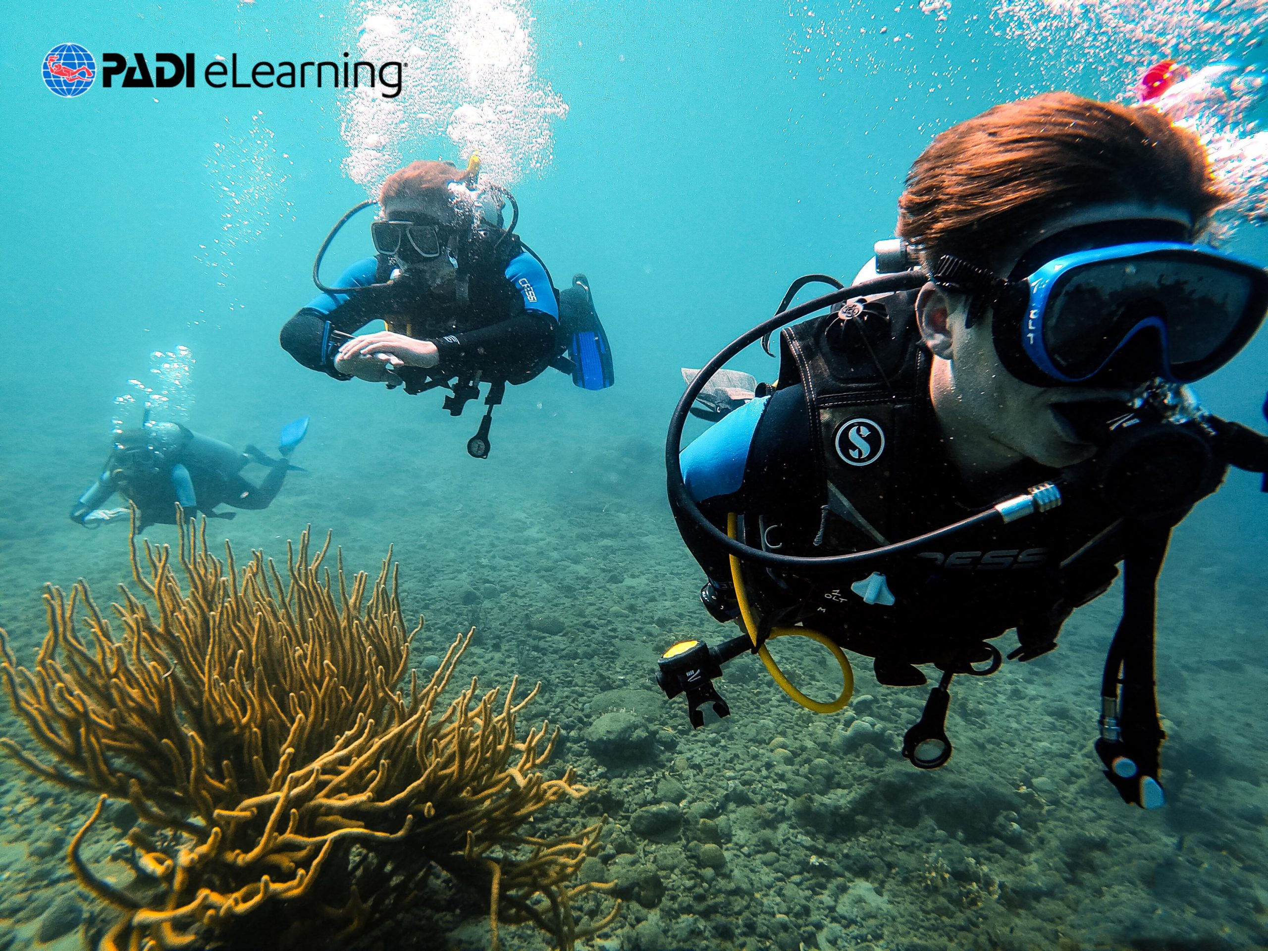 Divemaster – E-Learning ONLY