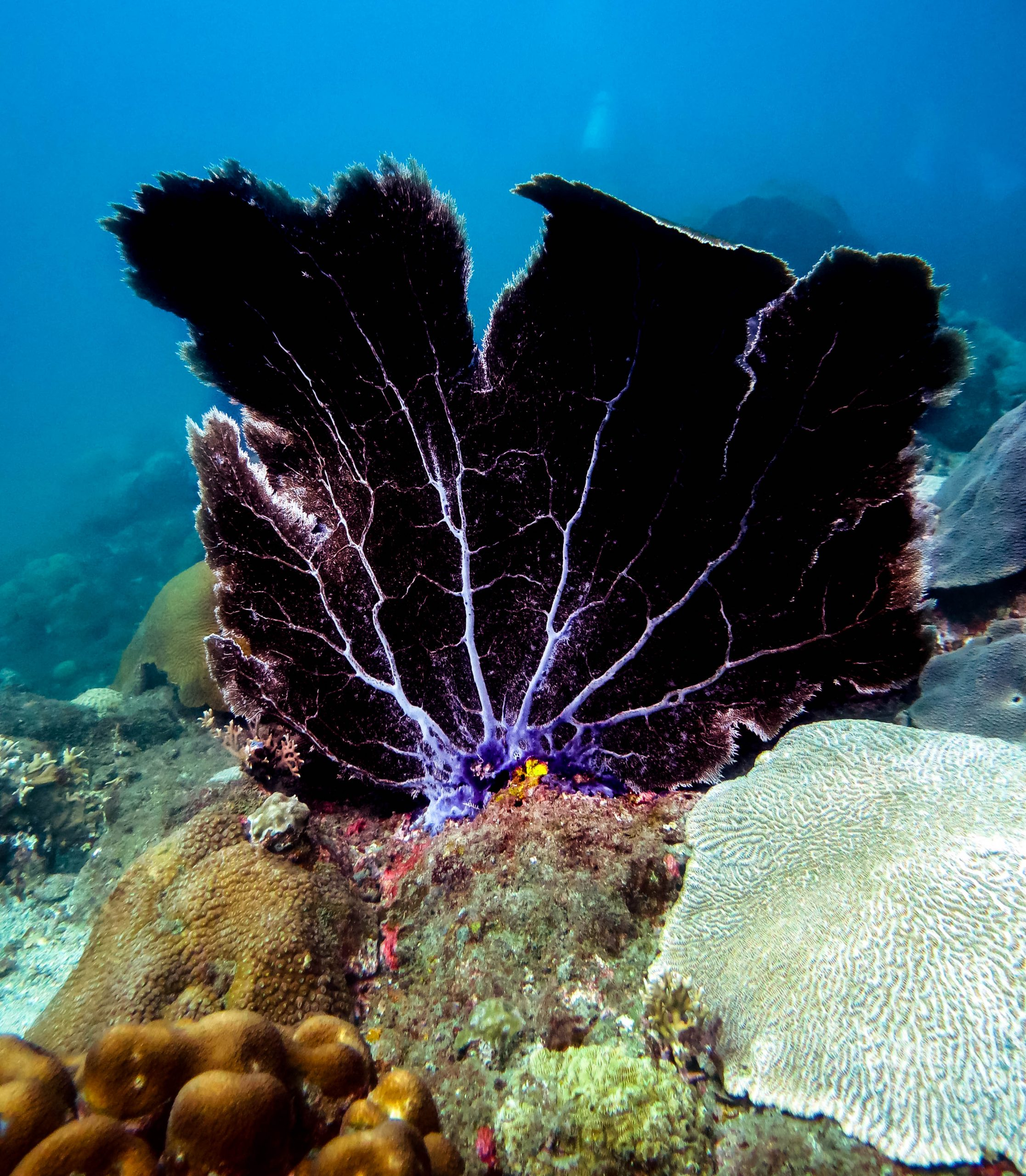 Coral Reef Conservation Specialty Course