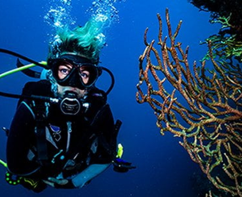 deep-dive-tayrona_500x300